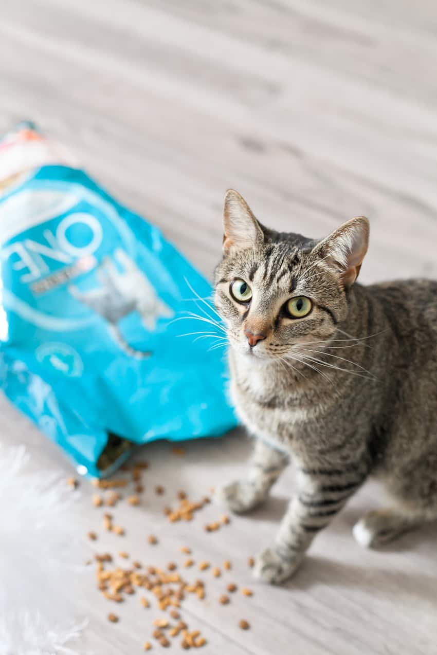 Simple Cat toy DIY! 5 tips for the best baby and pet photos!! Plus, a SUPER simple DIY cat toy that your toddler with LOVE!