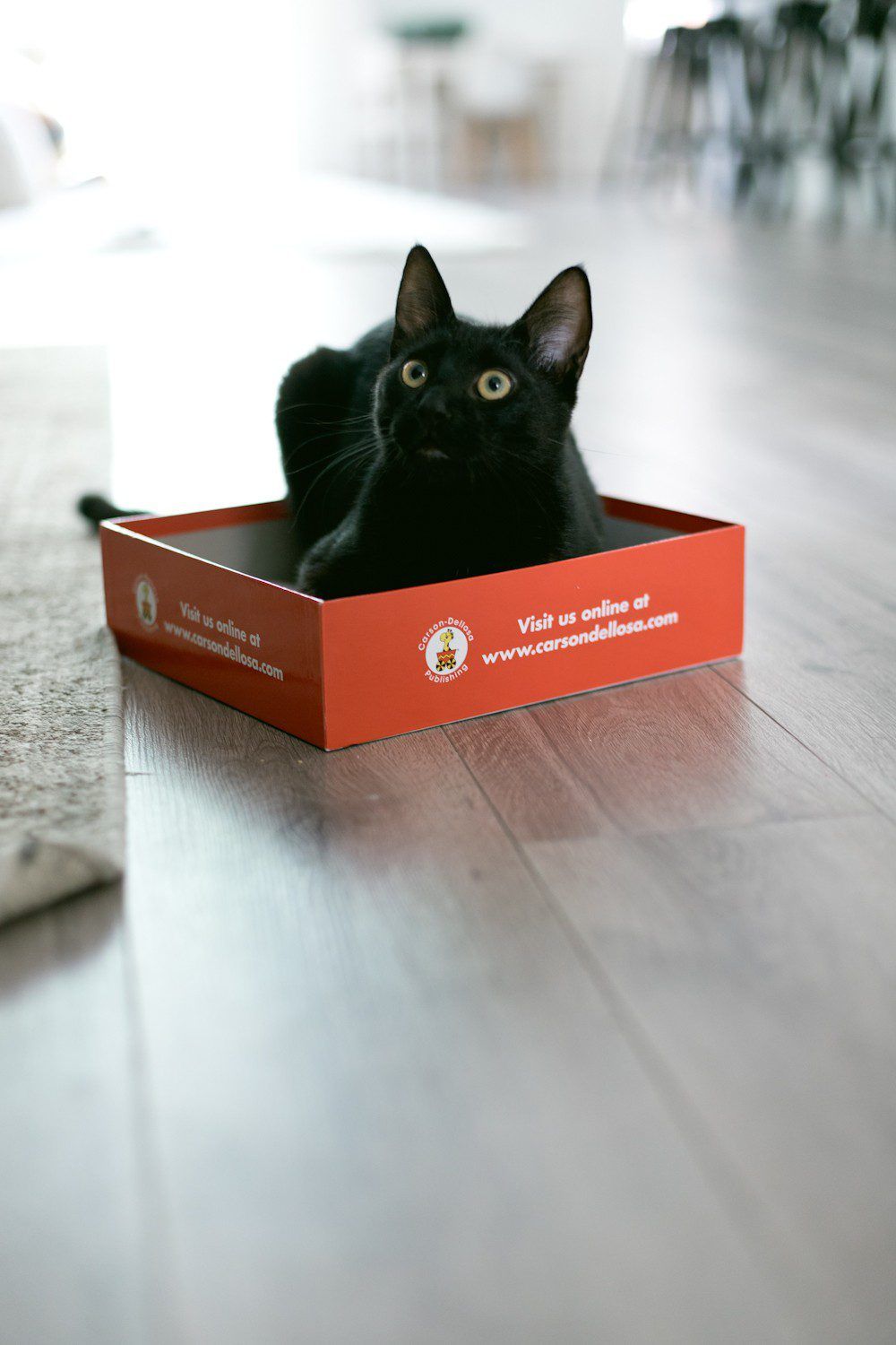 5 Essential Things for the Best Kitten Care from top US lifestyle blogger Tabitha Blue of Fresh Mommy Blog! I hate cat litter! Here's why the Litter Robot is amazing and our new kitten care best friend. | How to Train Your Cat to Use the Litter Box by popular Tampa life and style blog, Fresh Mommy: image of a black cat sitting in a box.
