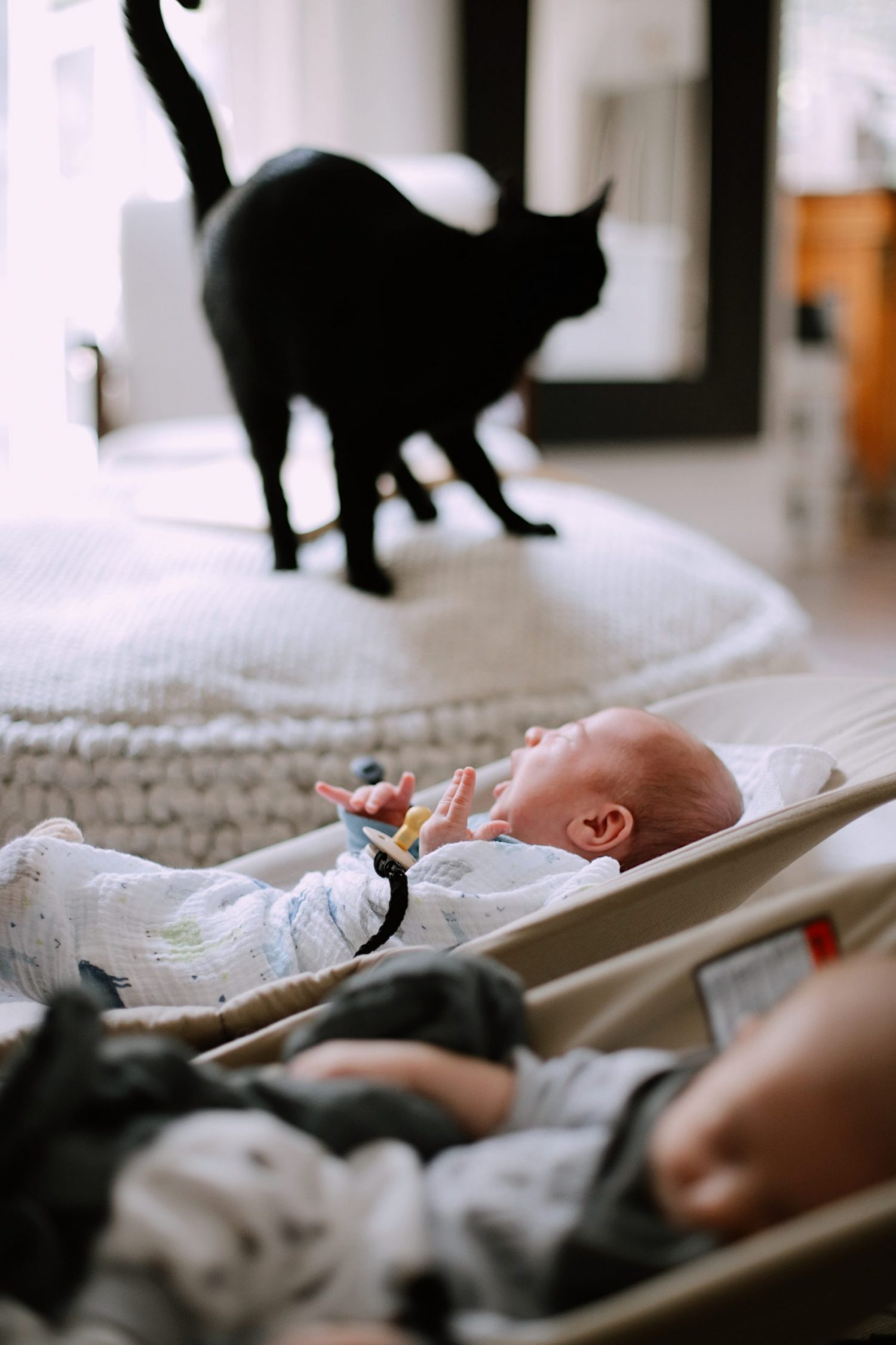 What You Don't Know About Cats and Newborns Living Together | Cats and Newborns by popular Florida motherhood blog, Fresh Mommy Blog:  image of a black cat next to newborn twin babies.