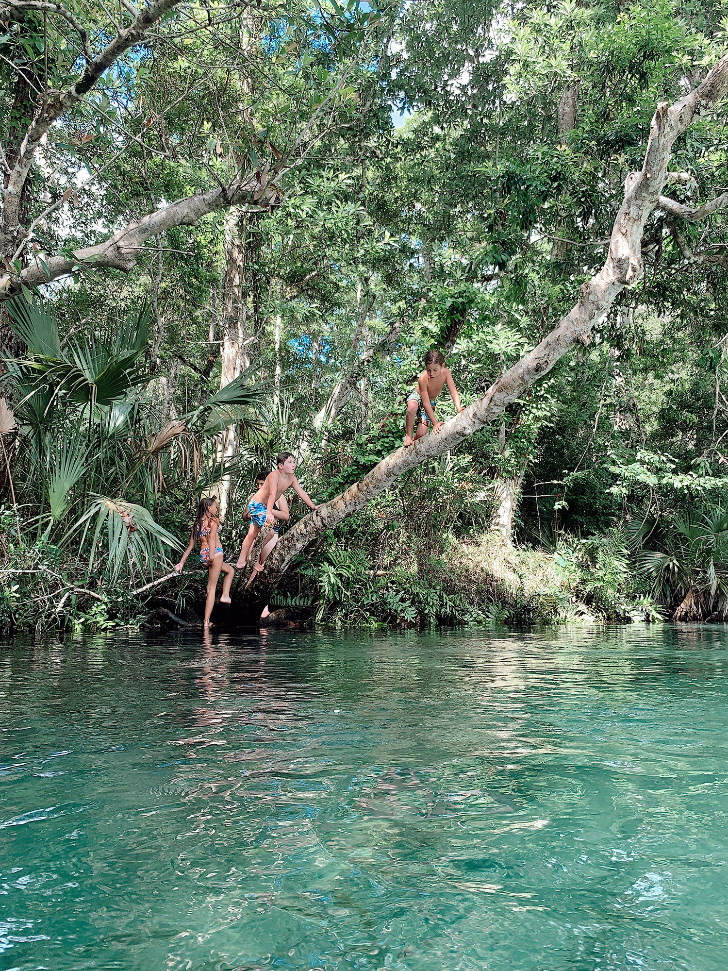 Tips for an Amazing Weeki Wachee Kayaking Florida Staycation. Visit Florida Travel ideas from top lifestyle blogger Tabitha Blue of Fresh Mommy Blog.   Weeki Wachee Kayaking by popular Florida blog, Fresh Mommy Blog: image of a group of kids climbing on a tree.