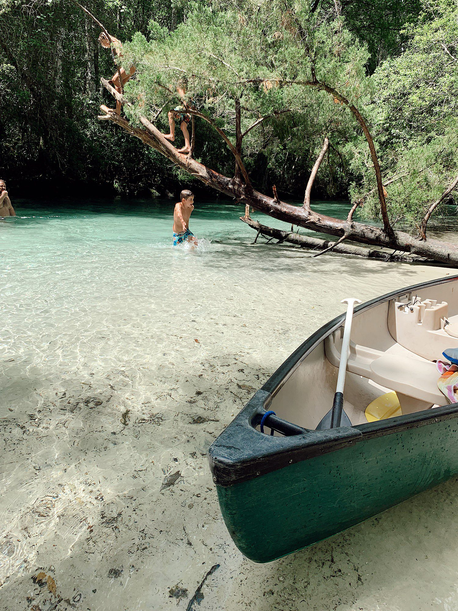 Tips for an Amazing Weeki Wachee Kayaking Florida Staycation. Visit Florida Travel ideas from top lifestyle blogger Tabitha Blue of Fresh Mommy Blog.   Weeki Wachee Kayaking by popular Florida blog, Fresh Mommy Blog: image of a group of kids climbing on a tree and playing in the water.