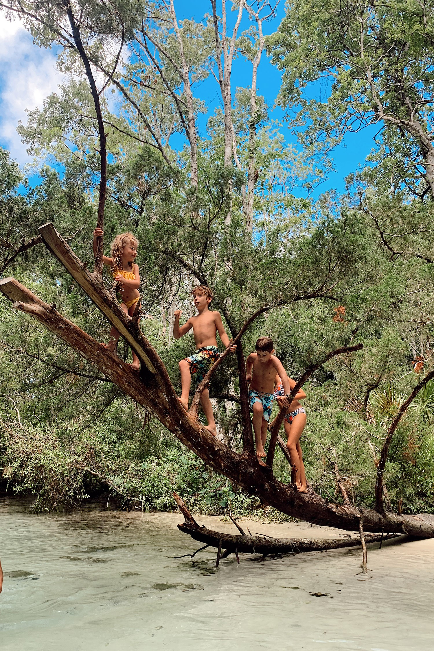 Tips for an Amazing Weeki Wachee Kayaking Florida Staycation. Visit Florida Travel ideas from top lifestyle blogger Tabitha Blue of Fresh Mommy Blog.   Weeki Wachee Kayaking by popular Florida blog, Fresh Mommy Blog: image of a group of kids climbing a tree.