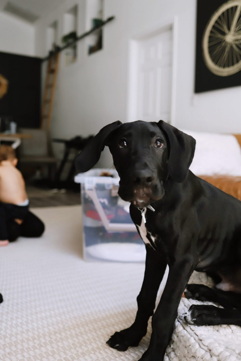Road Trip Packing Tips by popular Florida travel blog, Fresh Mommy Blog: image of a black puppy.