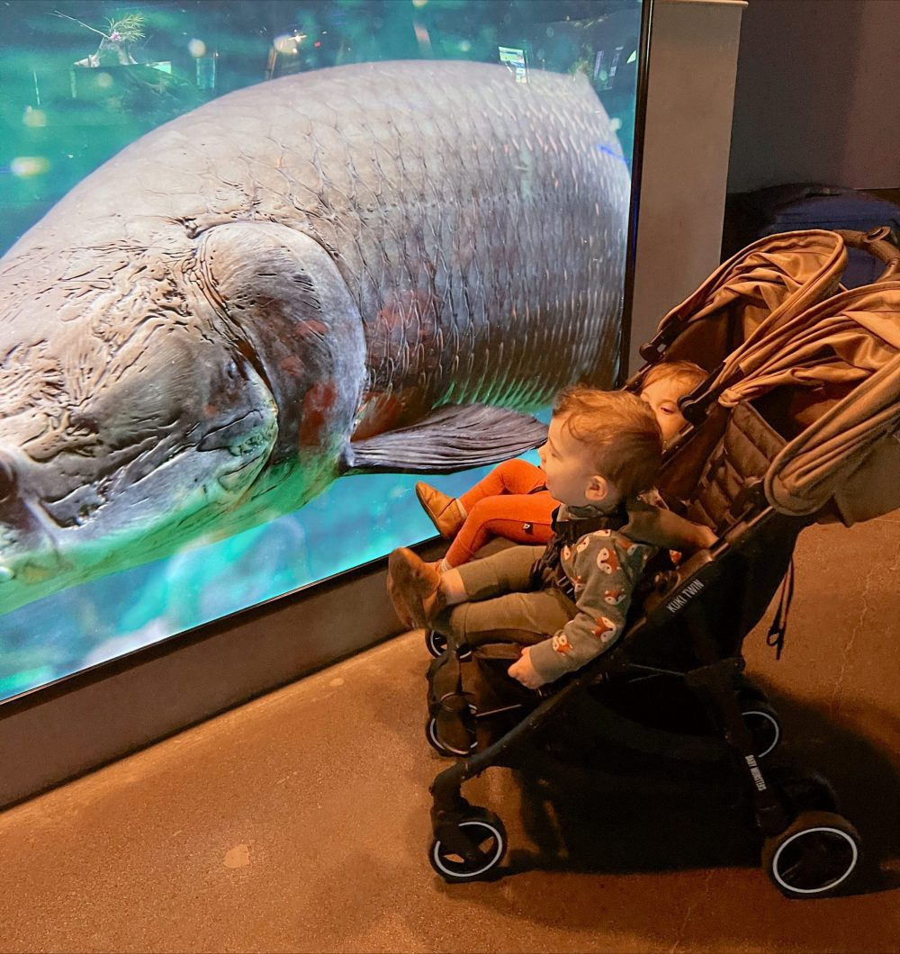 One of the Best Year Round Sun Destinations for Large Family Friendly Travel, Scottsdale Arizona. Holiday Winter Fun at Odysea aquarium at Arizona Boardwalk. |Guide by popular Florida travel blog, Fresh Mommy Blog: image of twin babies looking at a giant fish at the Odysea Aquarium.