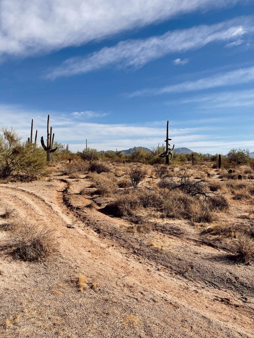 One of the Best Secret Winter Sun Destinations, Scottsdale Arizona. Horseback riding in the desert and family-friendly activities at MacDonald's Ranch. |Guide by popular Florida travel blog, Fresh Mommy Blog: image of saguaro cacti.