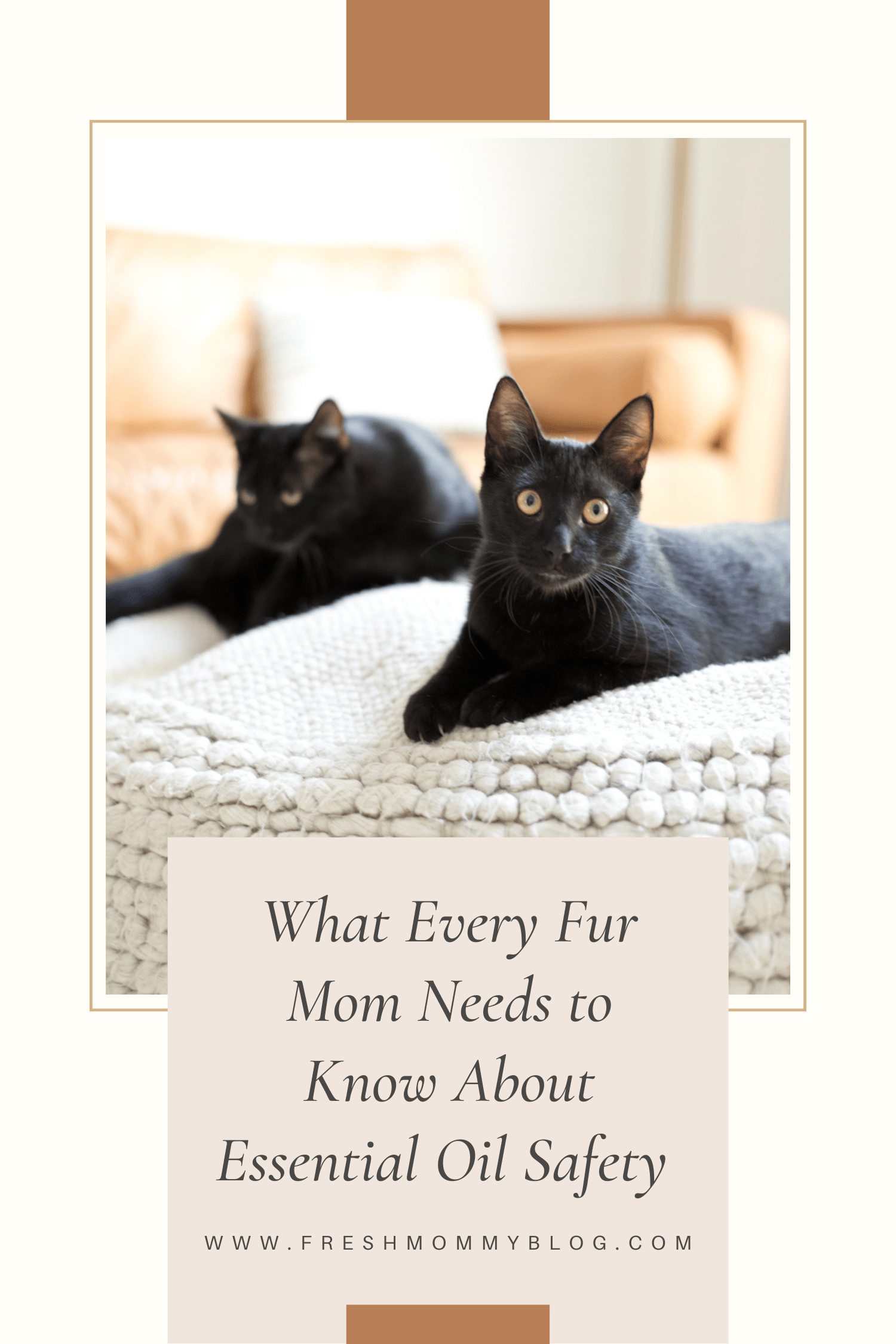 Let's get into using essential oils safe for cats. From what oils to use and which to avoid and HOW to use essential oil safe for cats.